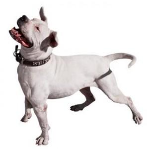 white dog looking upwards